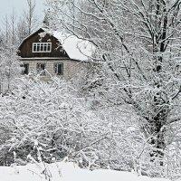 Любимая дача зимой :: Марина Шубина