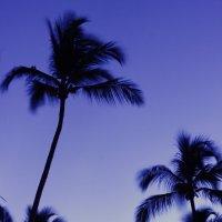 Доминиканский вечер :: Ильгам Кильдеев
