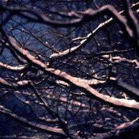 Ветви деревьев :: Irina Dmir