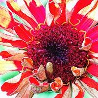 ...просто - цветок... :: Ира Егорова :)))