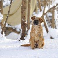 Пёс :: Юрий Бичеров