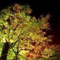Золотое дерево :: Игорь Герман