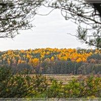 Осенний лес :: Alina_ Mash