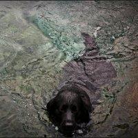 осенний плавец...) :: Елена Михайловна