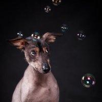 очень страшные пузыри :: Анастасия Журавлева