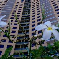 Городские цветы :: михаил кибирев