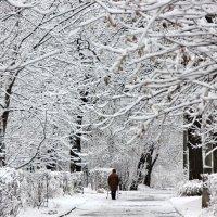 Зима в парке :: Ирина Слукина