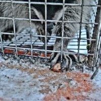 добыча пищи в диких условиях :: Екатерина Яковлева