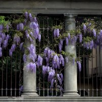 Цветы и бетон... :: ФотоЛюбка *