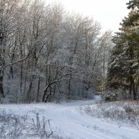 Зимняя дорожка :: Юрий Стародубцев
