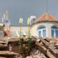 Каменный цветок :: Алексей Головненко