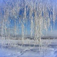 Серебристые ветви берёз. :: Наталья Юрова