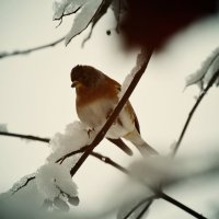 птичка :: Настя Настя