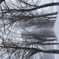 Туман среди деревьев :: Yarik Minakin