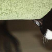 Без  кота и жизнь не та ) :: Банана Есимото/ Антипина