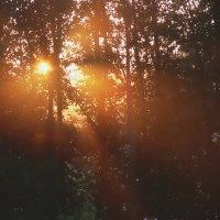 Солнце встает :: Ирина Романова