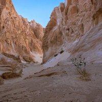каньон :: сергей агаев