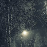 Вечерняя прогулка в тумане :: Елена Перевозникова