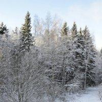 природа зимой хороша :: Ольга Герцык