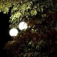 Ночь... :: Виктория Балковая