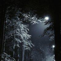 Ночью все кошки серы. :: Alexander Antonov
