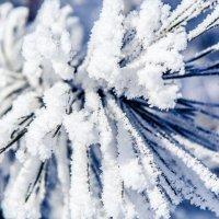 Сосна в снегу :: Дмитирй