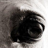 А лошади нужна забота... :: Анна Гаврилова