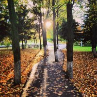 Осенний свет :: Эльза Королёва