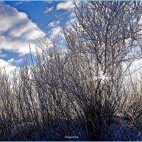 Мороз и солнце... :: Антонина Гугаева