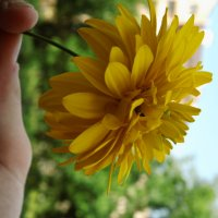 квітка :: Христя Стефанишина