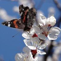 весна :: Геннадий Авденко