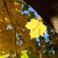 Lonely golden leaf :: Дмитрий Каминский