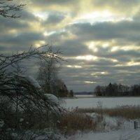 зимнее небо :: liudmila drake