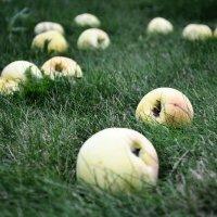 Яблочки :: Аня Маковчик