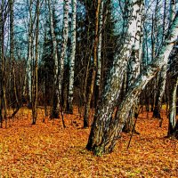 Золотой урожай осени :: Viacheslav Birukov