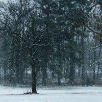 Первый снегопад 2013 :: Яков Геллер
