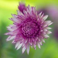цветок :: Екатерина Ветловская