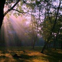 В прятки с солнцем :: Евгений Юрков