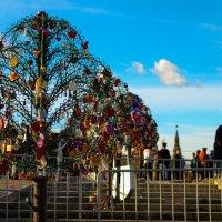 дерево счастья :: Сергей Федин