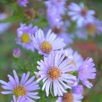 Цвет весны :: Дмитрий Зудин