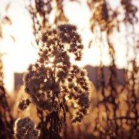Трава :: Айнур Алиева