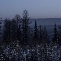 Ёлки-палки :: Алексей Некрасов
