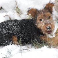Первый в жизни снег. :: Марина Николаева