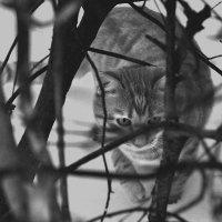 Охота :: Елена Грибакина