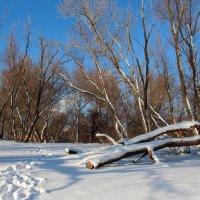В зимнем лесу :: Dr. Olver