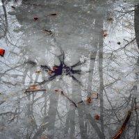 Лёд. Отражение. :: Владимир Хижко