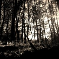закат на опушке леса :: Дмитрий Лущай