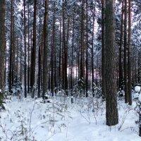 зимний лес :: Олег Петрушов