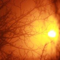 ветка и туман :: Ignatoff .