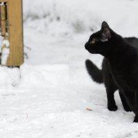 Черная кошка у ворот :: Андрей Лошаков